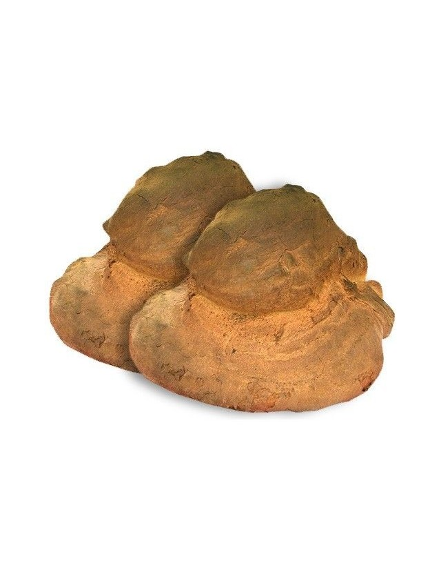 Pane di Altamura DOP cotto in forno a legna