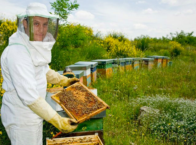 Miele, biologico è meglio