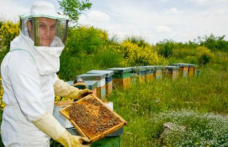 Alveari delle api