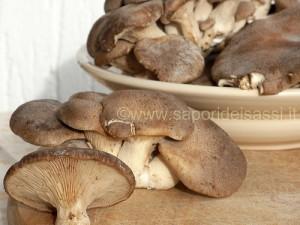 """I Cardoncelli, i funghi """"onesti"""" della Murgia materana e pugliese."""