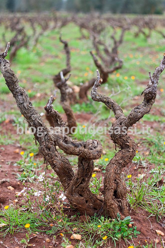 Laddove nascono i vini di Gianfranco Fino