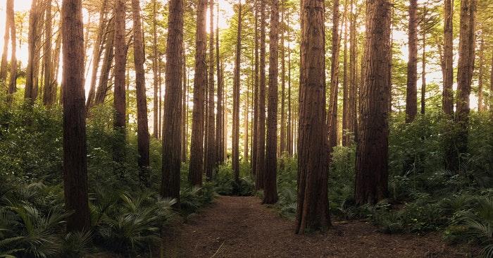 bosco di quercia