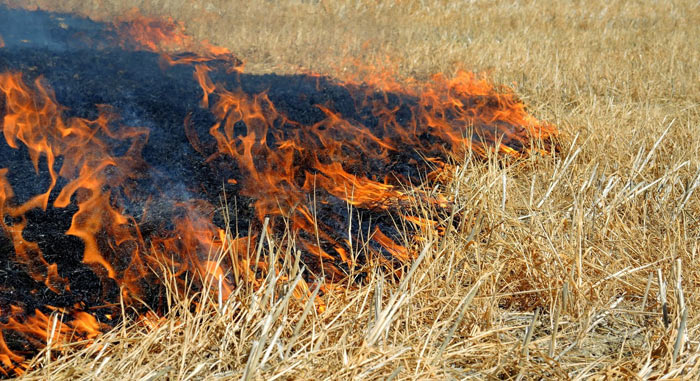 campo di grano incendiato