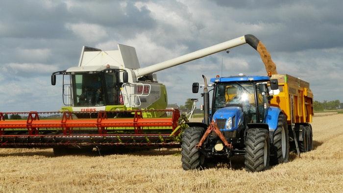 mietere il grano