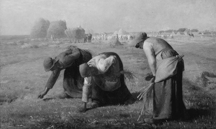 spigolatrici di grano