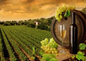 vigneto-vino-pugliese